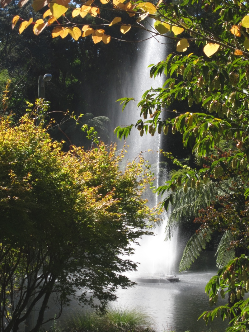the fountain at Pukekura Park, New Plymouth